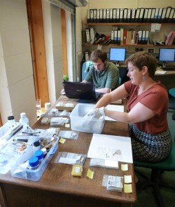 Collections volunteers working on the Small Finds archive at West Stow Anglo-Saxon Village.